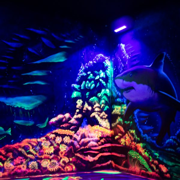Hai unter UV-Lampe
